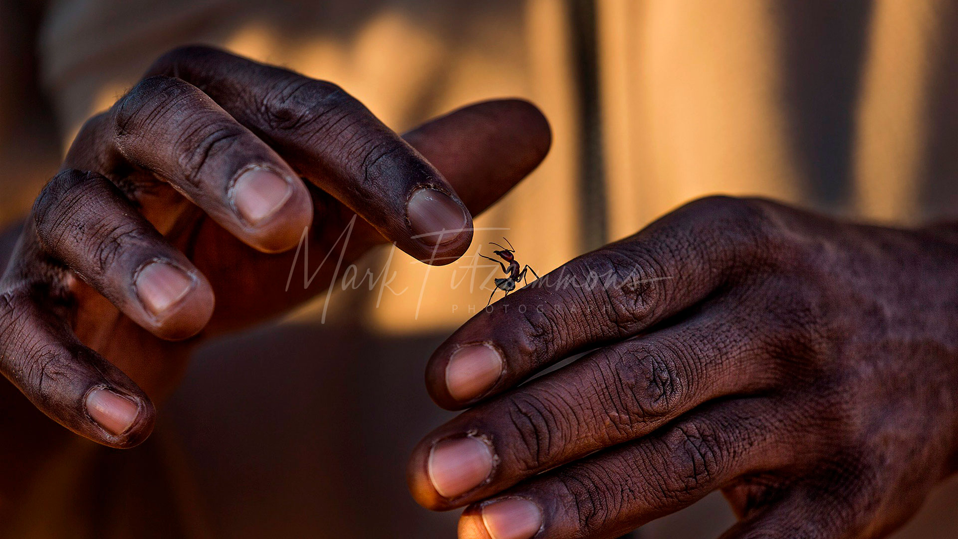 Mark Fitzsimmons Photography African Ant