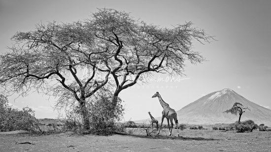 Mark Fitzsimmons Photography